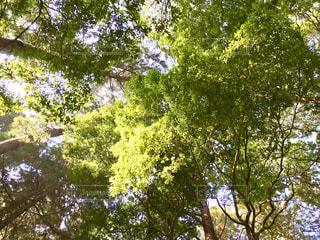 大きな木🌲の写真・画像素材[846107]