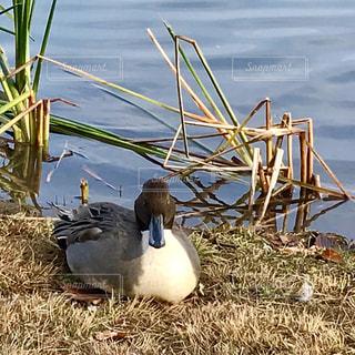 草の上で休む鳥(•ө•)♡の写真・画像素材[846295]