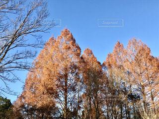 冬の樹木の写真・画像素材[931002]