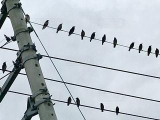 電線にムクドリが並んでいます。の写真・画像素材[996238]