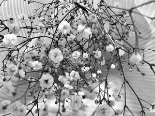 かすみ草❁の写真・画像素材[1069205]