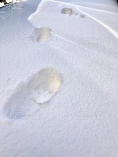 新雪に靴の足跡👣の写真・画像素材[1081612]