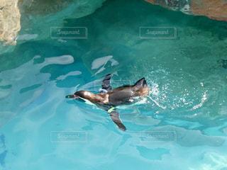 泳ぐペンギン🐧♡の写真・画像素材[1082680]