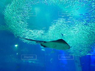 たくさんの泳ぐ魚たち🐟の写真・画像素材[1089775]