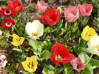 色とりどりの花たち🌸🌷🌸🌹🌺🌻🌼の写真・画像素材[1118966]