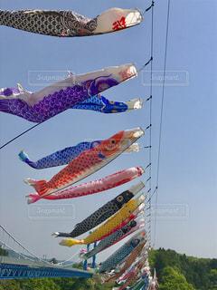 青空を泳ぐ鯉のぼり🎏の写真・画像素材[1152750]