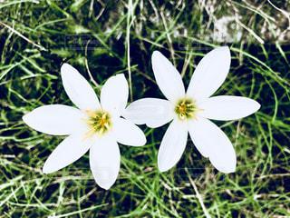 白い花❀❀の写真・画像素材[1377828]