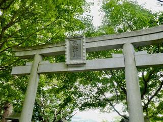 龍蛇神社の鳥居の写真・画像素材[1465218]