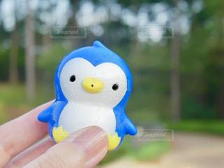 かわいいペンギンの写真・画像素材[1465584]