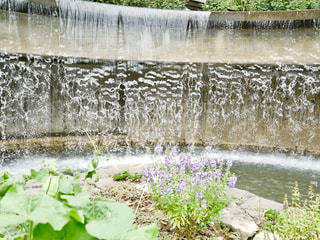 滝とむらさき色の花の写真・画像素材[1484774]