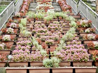 お花のプランター並べてハート❤の写真・画像素材[1492403]