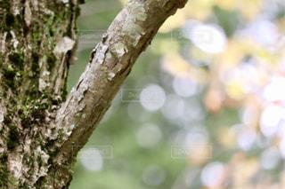 晴れの日の森の中🌲の写真・画像素材[1542921]