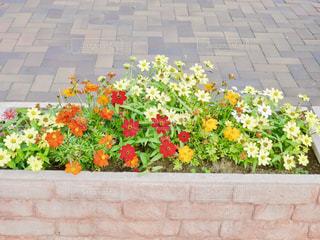 レンガ歩道にカラフルな花🌸の写真・画像素材[1593856]