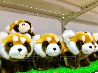 レッサーパンダのぬいぐるみの写真・画像素材[1608569]