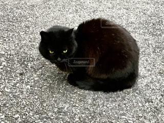 旅先で出会った黒猫ちゃん^._.^の写真・画像素材[1678059]