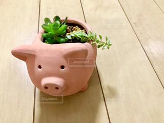 ぶたさんの植木鉢に多肉植物🌿の写真・画像素材[1798507]