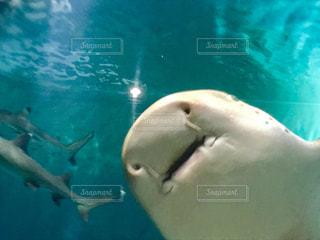 水面下を泳ぐサメのアップ🦈の写真・画像素材[1809118]