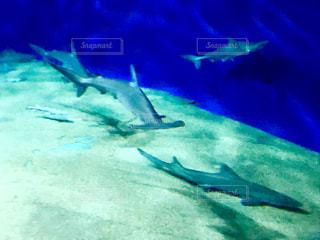 水面下を泳ぐサメ🦈の写真・画像素材[1809120]