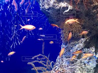 オレンジ色の魚◎⚪︎。.(∵ )Э )3の写真・画像素材[1809121]