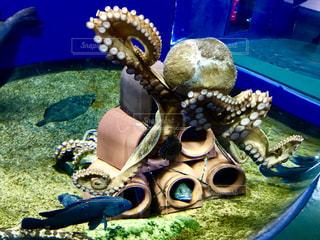 蛸壺の中に魚🐟タコは周りをウロウロ🐙の写真・画像素材[1811057]