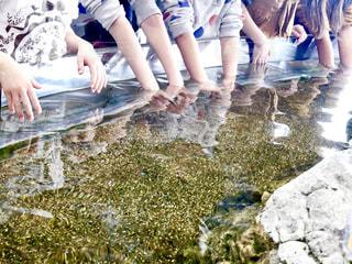 水の中に手を入れ遊ぶ子供達の写真・画像素材[1812843]