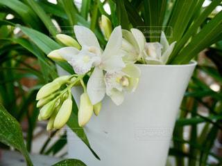 白い花🌸の写真・画像素材[1820419]