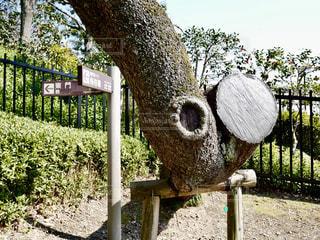 穴がある樹木の写真・画像素材[1836070]