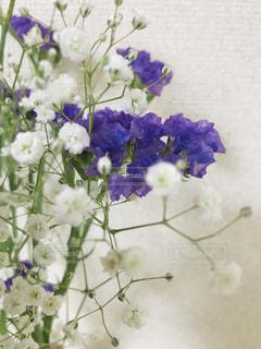 紫色のスターチスとかすみ草の写真・画像素材[3248800]