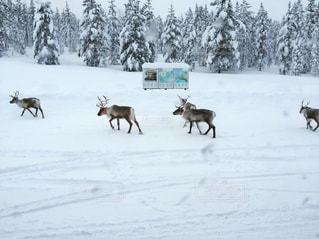 雪の写真・画像素材[672302]