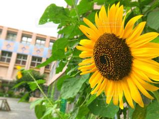 花の写真・画像素材[696642]