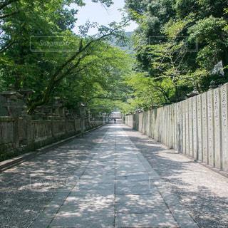 長い道の写真・画像素材[792161]