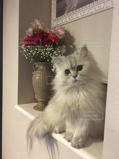 No.673992 猫