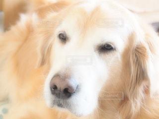 犬の写真・画像素材[673258]