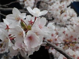 花の写真・画像素材[673405]
