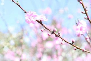 桃と空との写真・画像素材[1088895]