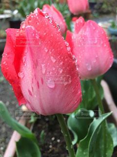 花の写真・画像素材[673675]