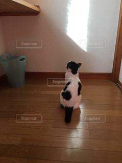 猫の写真・画像素材[673732]