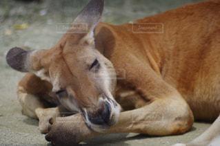 近くに地面に横たわっている犬のアップの写真・画像素材[714506]