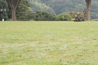 緑豊かな緑の草原に放牧牛の群れの写真・画像素材[763501]