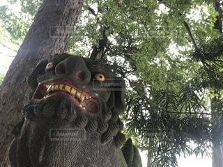 木の像の写真・画像素材[778389]