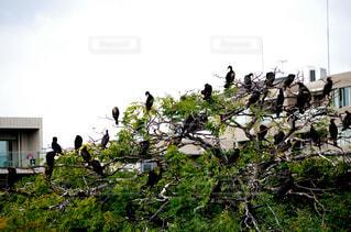 カモメの群れが草の中に立っています。の写真・画像素材[805590]