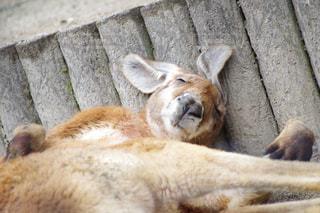 地面に横たわって動物の写真・画像素材[1025701]