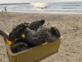 ビーチに座っている鳥の写真・画像素材[1088665]
