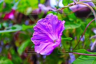 近くの花のアップの写真・画像素材[707107]