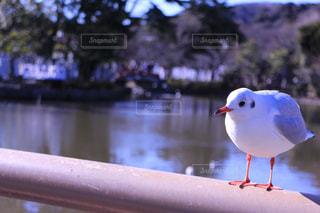 水の体の横に立っている小さな白い鳥の写真・画像素材[747363]