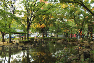 近くに池のアップの写真・画像素材[799507]