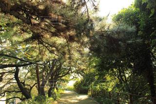 森の大きな木の写真・画像素材[801084]