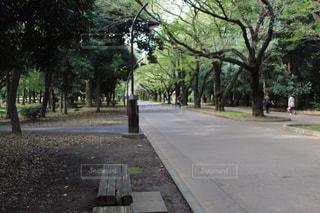 木に囲まれる道の写真・画像素材[840200]