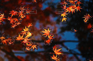 秋の終わりの写真・画像素材[902063]