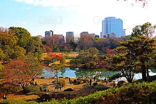 バック グラウンドで市と水を体の横にあるツリーの写真・画像素材[915934]